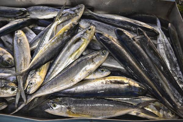 Fish market Gozo, Malta
