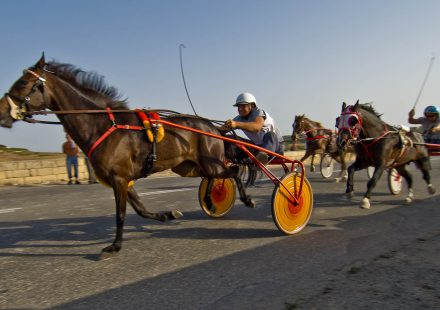 Driving Gozo Horse Racing - Xaghra