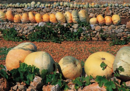 autumn-time-in-gozo
